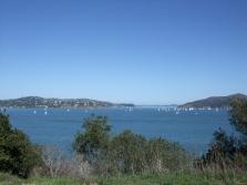 Viele Segelboote waren auch wieder unterwegs, das gegenüberliegende Ufer ist Tiberon